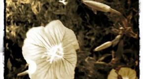 همراهنگاره:  بوستان