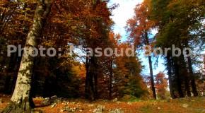 درفک سفر به دیدنیهای پاییز