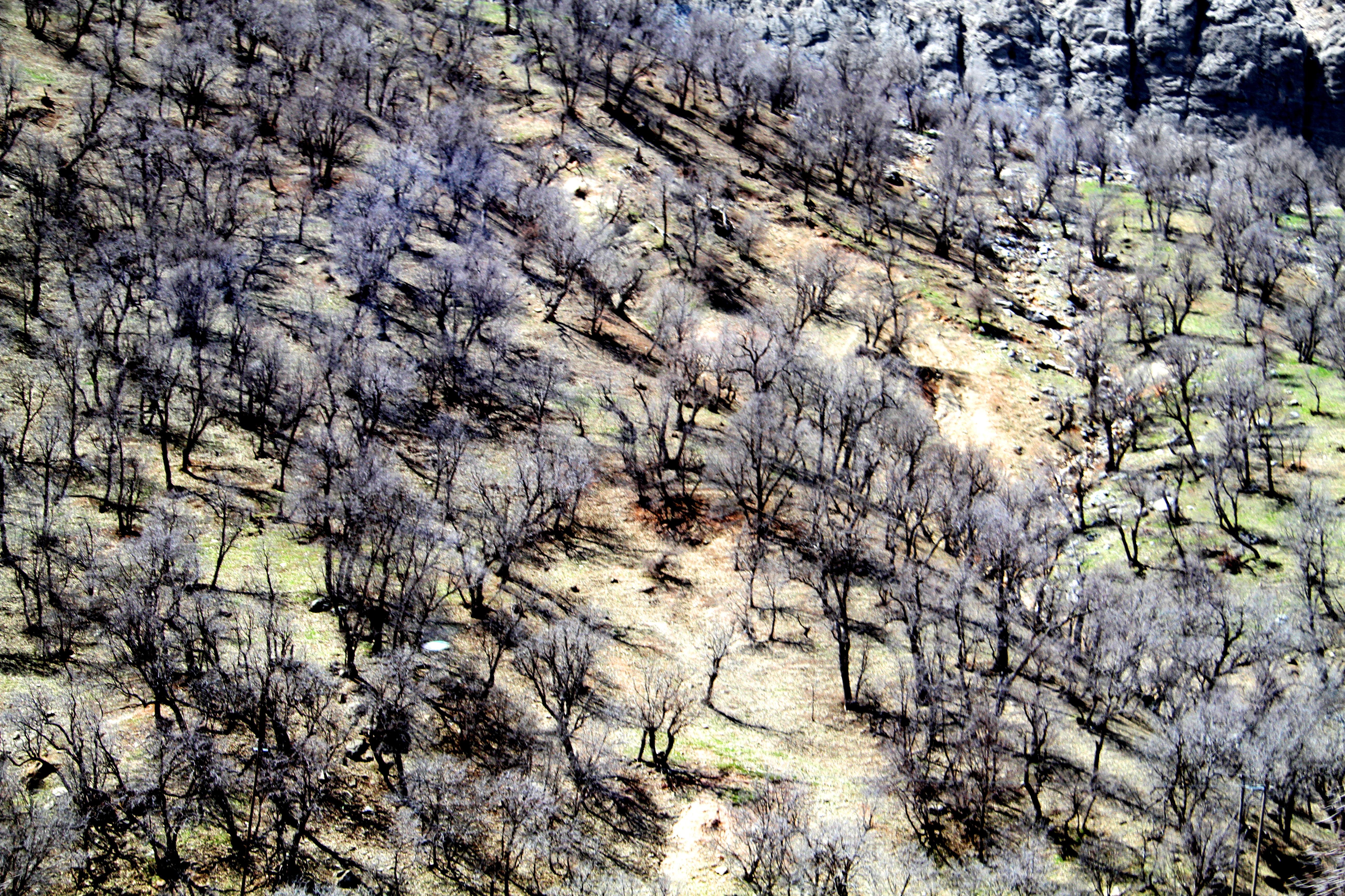 هجوم پروژههای عمرانی مخرب به زاگرس: محیط زیست چهارمحال و بختیاری بر سر دوراهی است