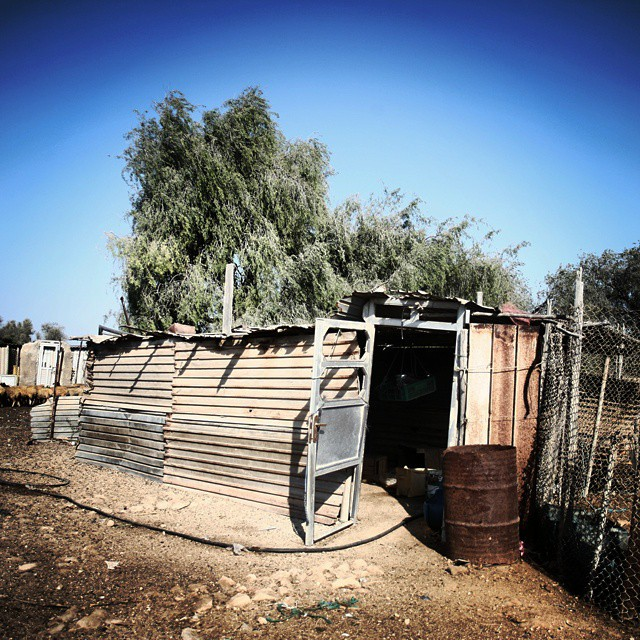 نگاره:  A few minutes from the modern expensive touristy city, Kish, you can find a poor village still in its entirely rural style, called Baghu