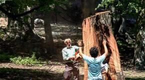 نگاره:  جنگلزدایی