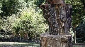 نگاره:  درخت بودچوب شد