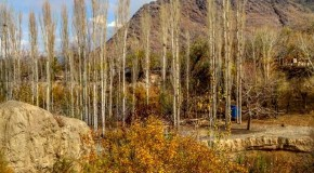 نگاره:  درختها همه قامت کشیدهاند