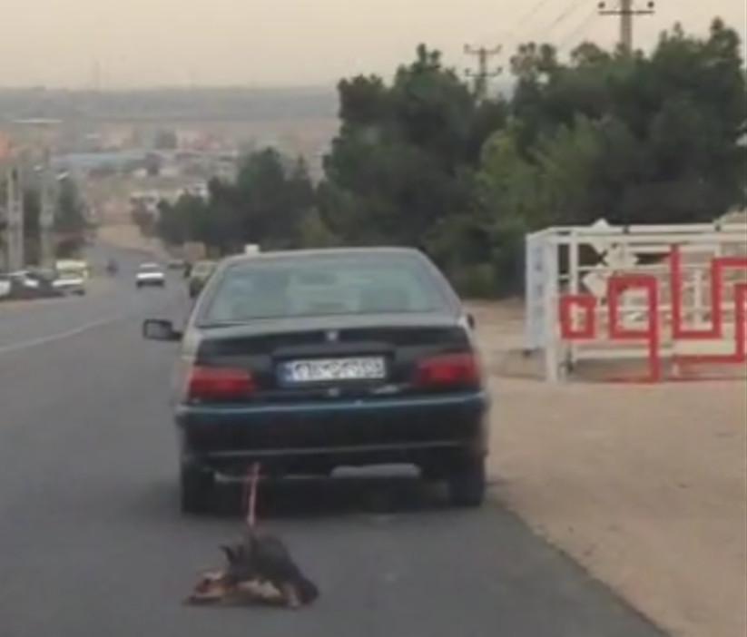 تکرار حیوانآزاری این بار در تهران