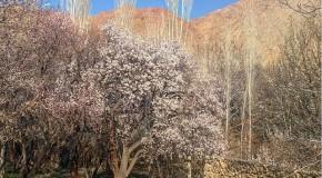 نگاره:  باغهای برزُک به پیشواز بهار رفتهاند