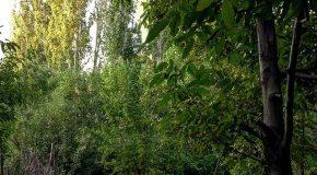 نگاره:  بازی نور لای شاخهبرگهای باغهای برزُک