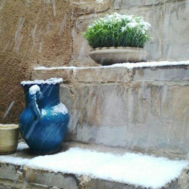 نوروزانه: هزار نرگس زرین