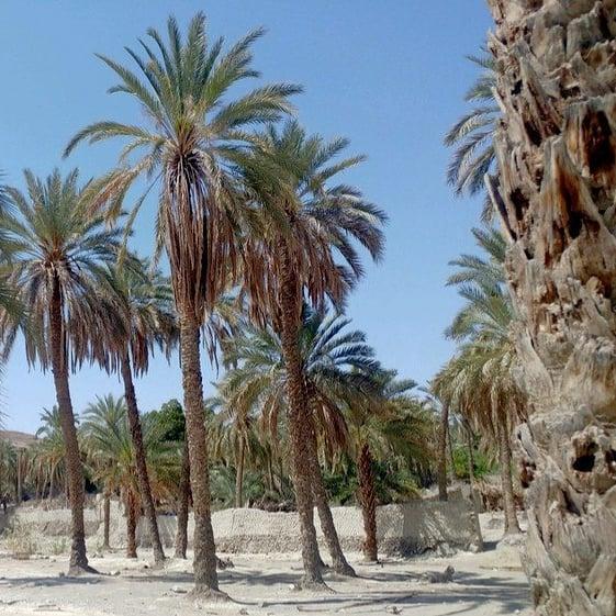 روز دوم سفر به بلوچستان
