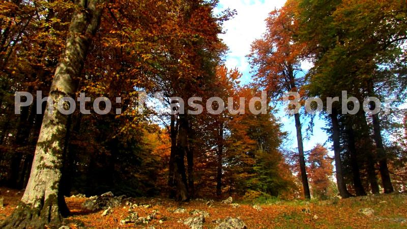 جنگل درفک در پاییز