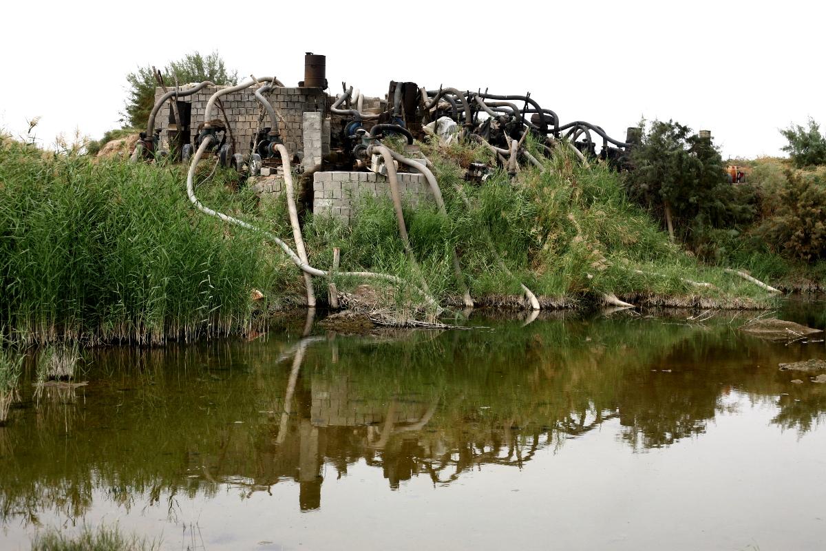 نخستین قربانیان دریاچه ارومیه
